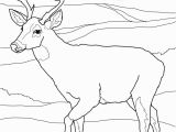 White Tailed Deer Coloring Page Buck Clipart Coloring Page Picture Buck Clipart