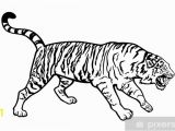 White Tiger Wall Mural Ing Tiger Black and White Sticker Pixerstick