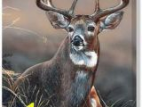 Whitetail Deer Murals 158 Best Deer Images In 2019