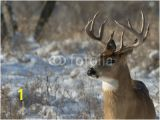 Whitetail Deer Murals Big Deer National Wall Mural Threaded Wallpaper Murals