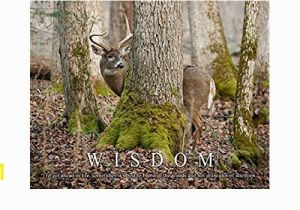 Whitetail Deer Wall Murals Amazon Whitetail Deer Motivational Poster Art Print 11×14 Bow