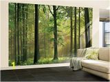 Whitewashed Wood Wall Mural Amazon 100×144 Autumn forest Huge Wall Mural Art Home & Kitchen
