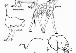 Wild Animals Coloring Pages Pdf African Animal Drawing at Getdrawings