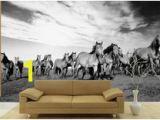 Wild Horses Wall Mural 23 Best Horse Wall Murals Images