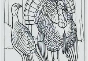 Wild Turkey Coloring Page 34 Best Turkey Images