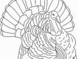 Wild Turkey Coloring Page 56 Best Turkey Drawing Images