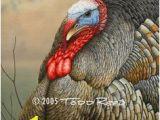 Wild Turkey Wall Murals 19 Best Wild Turkey Images