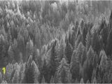 Winter forest Wall Mural Trees From Above Blackwhite Wall Mural