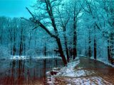 Winter Scene Wall Murals 2880×1800 Wallpaper Winter forest 5k 4k Wallpaper