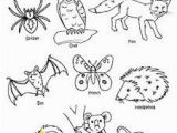 Woodland Animal Coloring Pages Nocturnal Animals Coloring Sheets