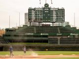 Wrigley Field Ivy Wall Mural Schedule Archives 4bases4kids