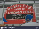 Wrigley Field Ivy Wall Mural Wrigley Field Fans Stock S & Wrigley Field Fans Stock