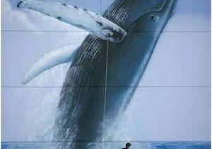 Wyland Murals 367 Best Wyland Art Images